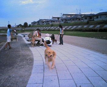 今日のお散歩風景(*^_^*)