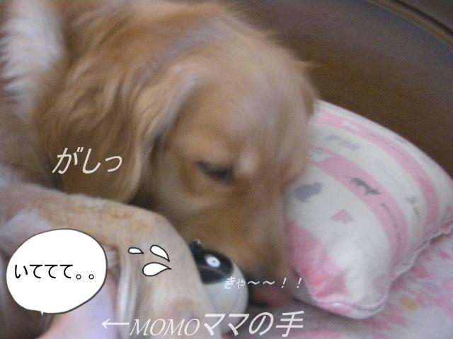 Sany0058_2